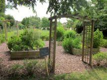 jardin-aromates