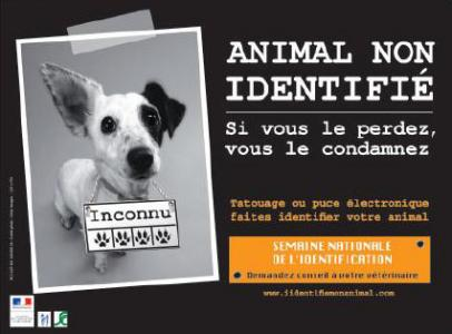 identification chien chat